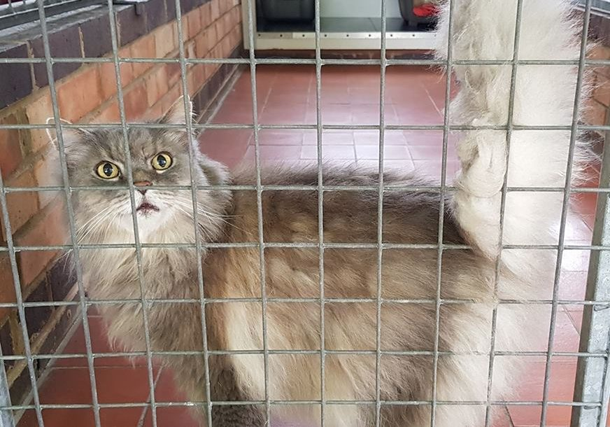 image of a cat in a cage