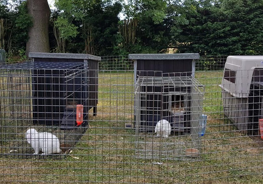 image of kennels